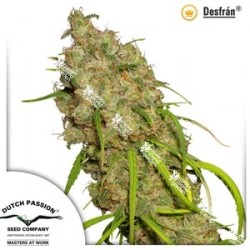 Desfran (Dutch Passion Seeds)