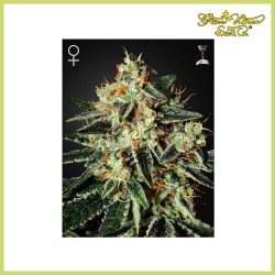 Cheese (Green House Seeds)