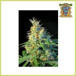Edición Coleccionista 1 (Sweet Seeds)