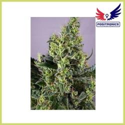 Claustrum (Positronics Seeds)