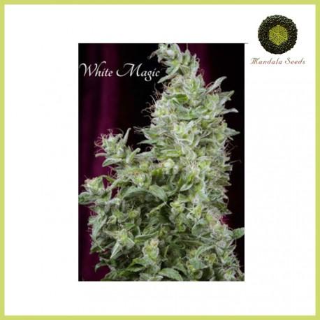 White Magic (Mandala Seeds)
