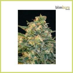 Guanabana (Blimburn Seeds)