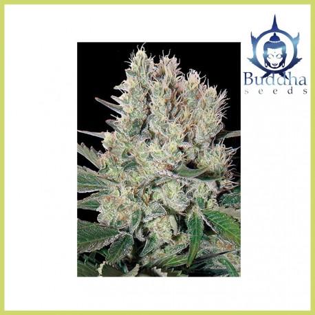 Syrup (Buddha Seeds)