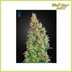 Green-O-Matic Auto (Green House Seeds)
