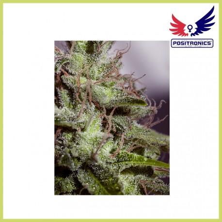 SuperCheese Express (Positronics Seeds)
