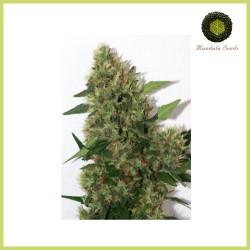 Chill-OM (Mandala Seeds)