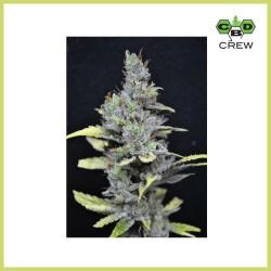 CBD Medi Haze (CBD Crew)