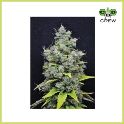 CBD Skunk Haze (CBD Crew)