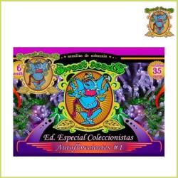 Coleccionista - Autofloreciente 1 (Sweet Seeds)