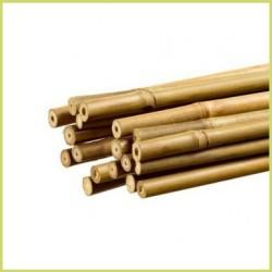 Tutor / Caña Bambú